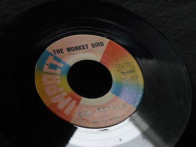 1d-the-revels-with-robert-hafner-the-monkey-bird-revellion-garage-surf-rock_8033763